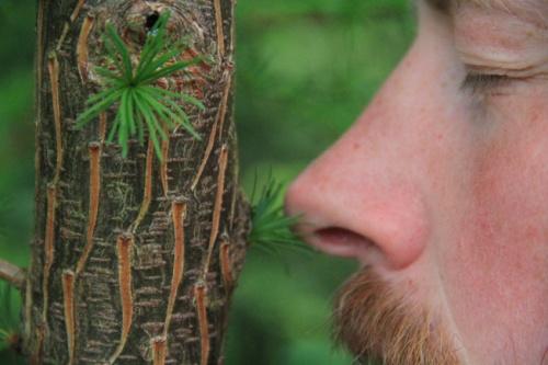 Orri : tree